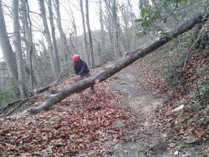 Retirada d'arbres caiguts a la ruta dels Barons de Santa Pau